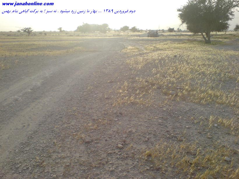 گزارش تصويري > ۱ ساعت در صحرا لخو . مقداري كنار . مناظر زيبا و زمين زرد رنگ  :)